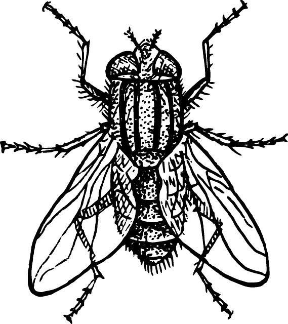 housefly-153407_640